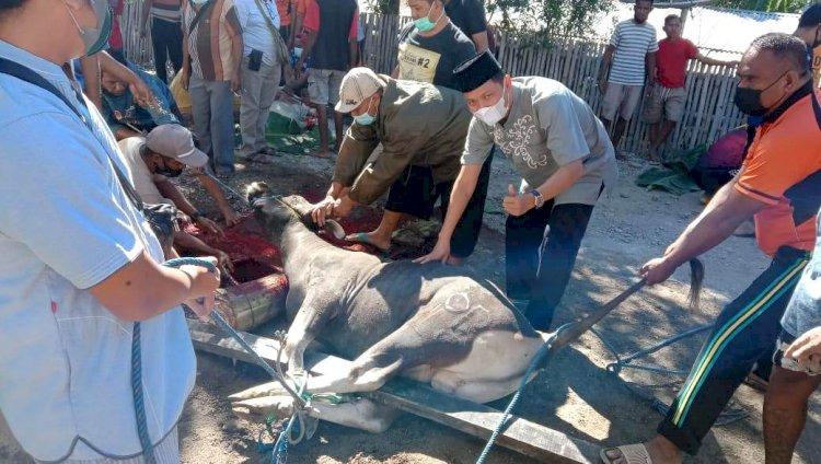 Rayakan Idul Adha 1442 H, Kapolres Belu bersama Anggota Sembelih 8 Ekor Sapi dan 3 Kambing Kurban