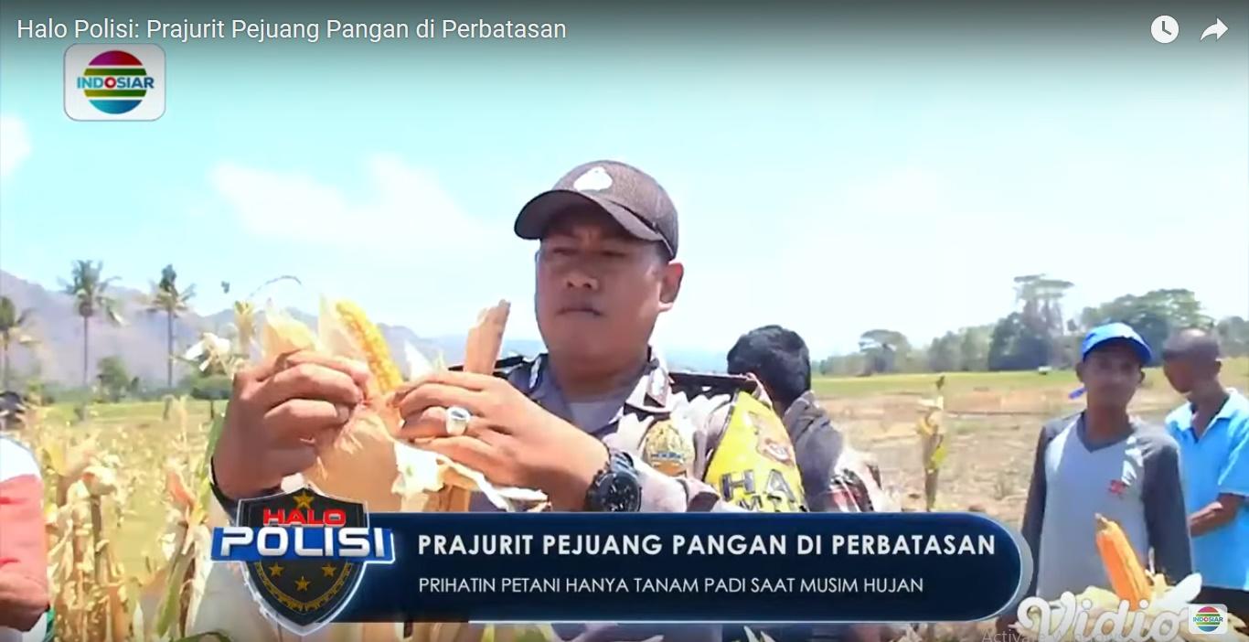 Perbaiki Ekonomi Masyarakat Lewat Pertanian, Intip Kisah Brigadir Yusran Sang Pejuang Pangan di Perbatasan RI-Timor Leste